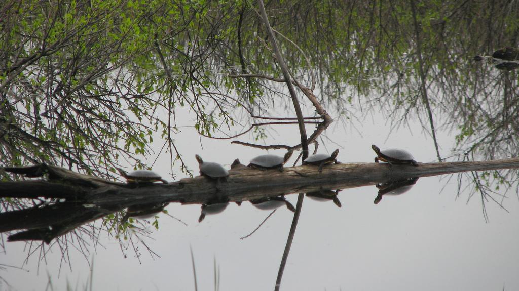 Avez-vous vu des tortues?